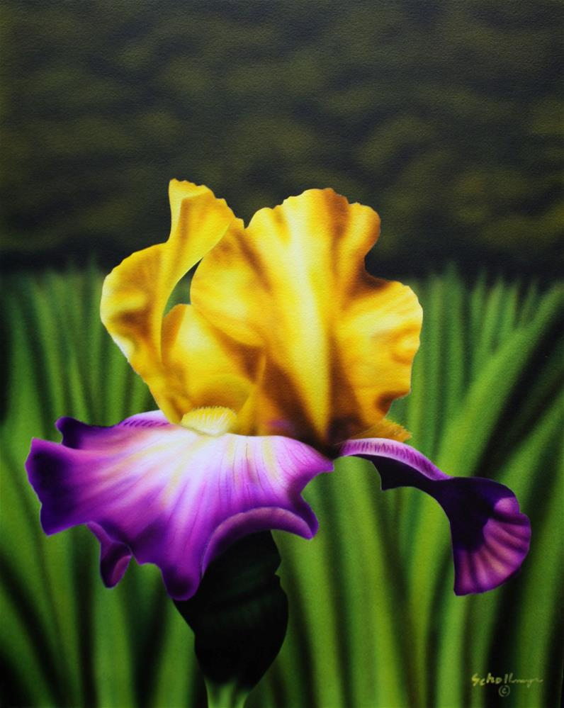 """Yellow and Purple Iris"" original fine art by Fred Schollmeyer"
