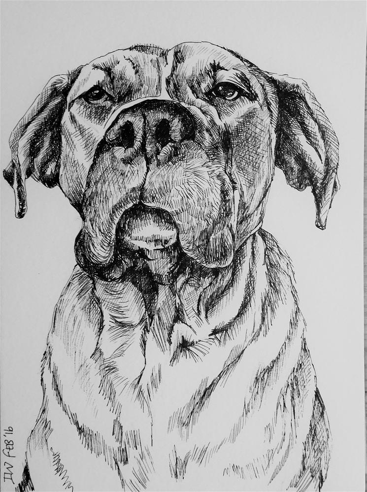 """""""Mastiff - Dog sketch 10"""" original fine art by Daryl West"""
