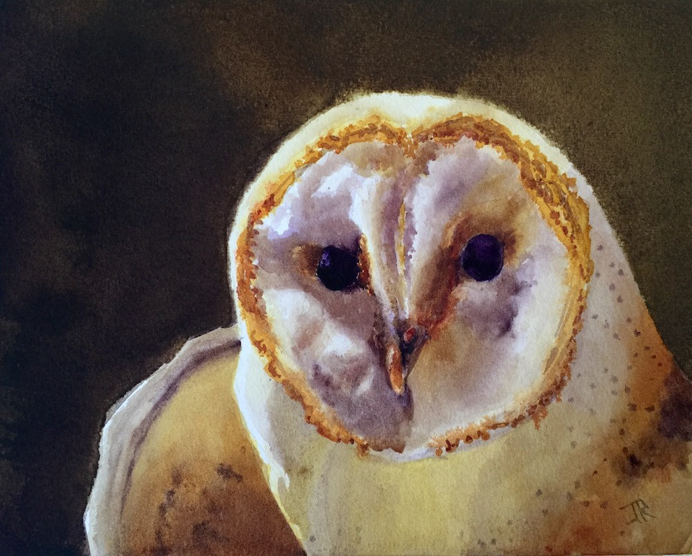 """Barn Owl"" original fine art by June Rollins"