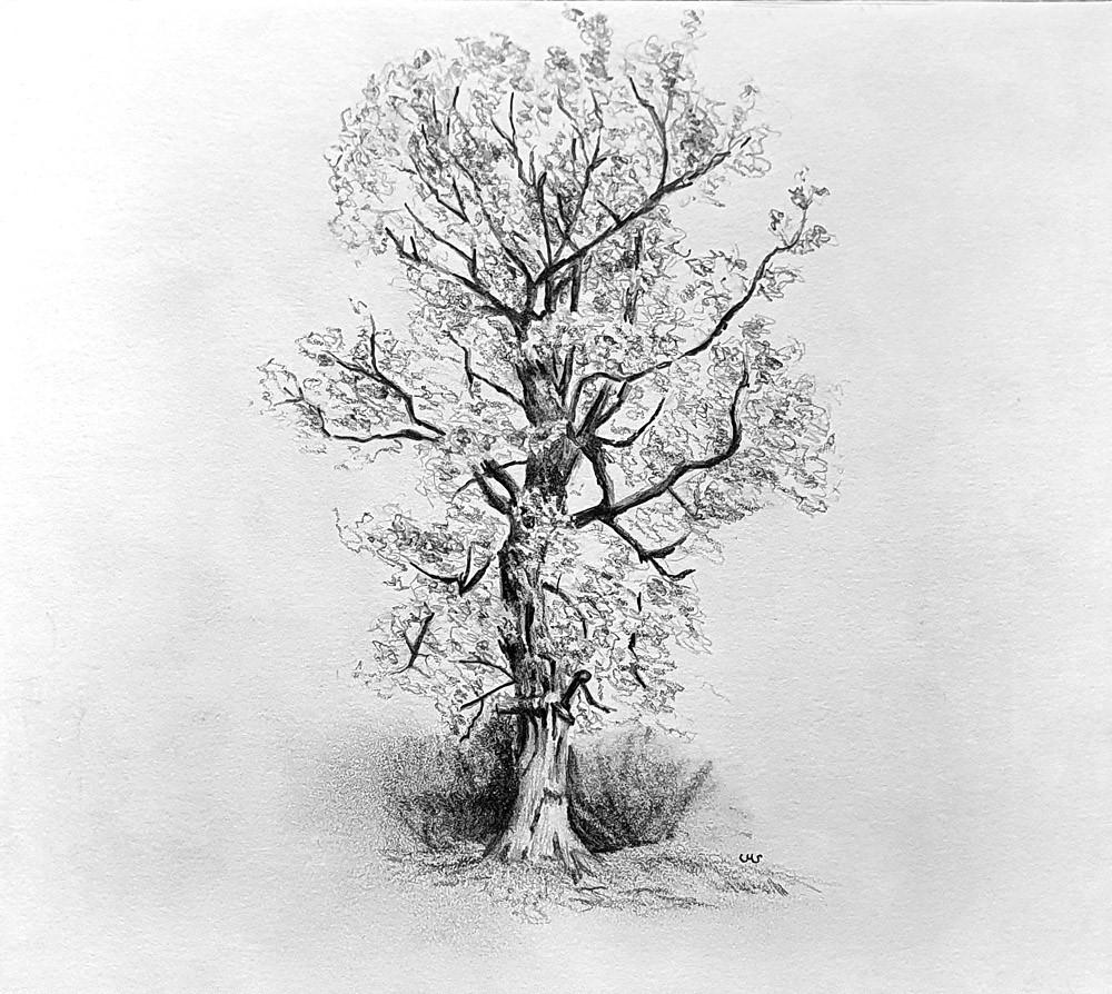"""""""Scottish Oak in Spring"""" original fine art by Ulrike Miesen-Schuermann"""