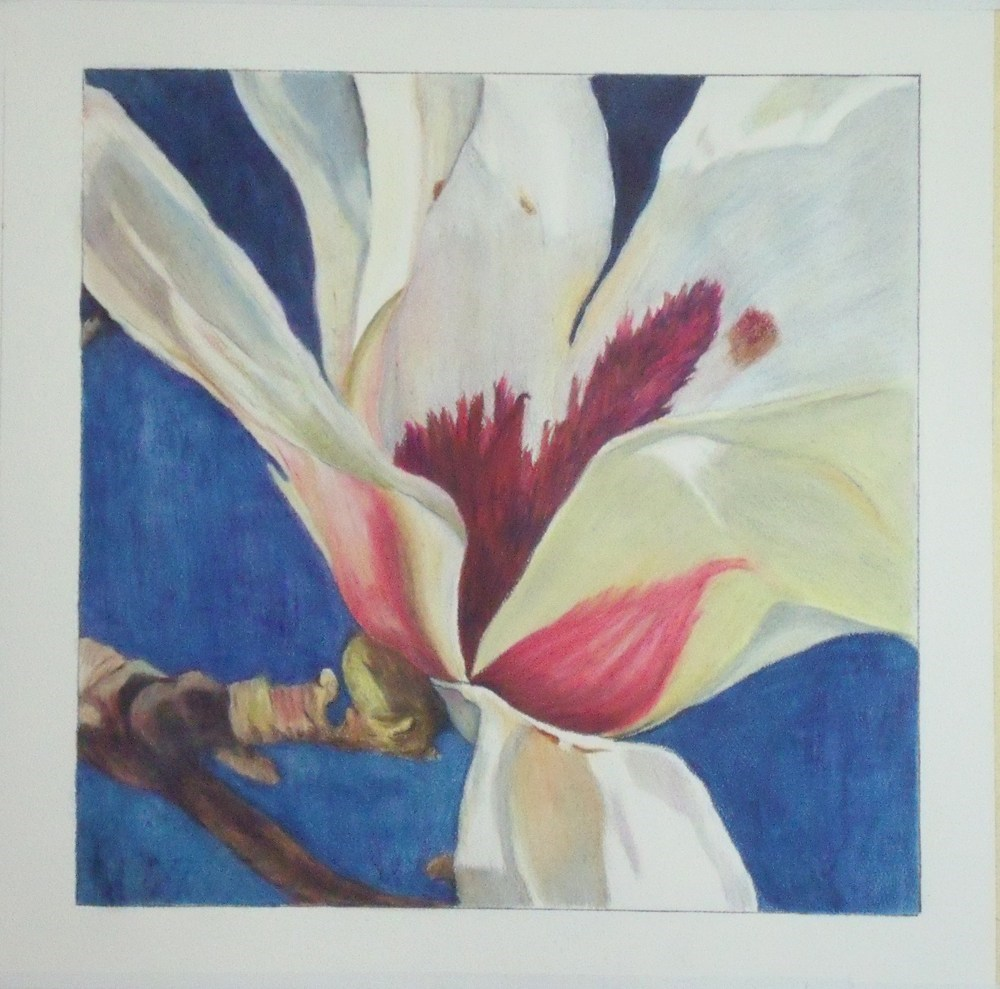 """Magnolia"" original fine art by Nelvia  McGrath"