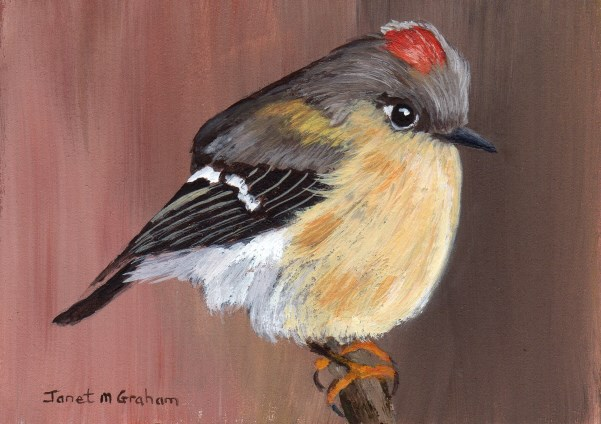 """Ruby Crowned Kinglet ACEO"" original fine art by Janet Graham"