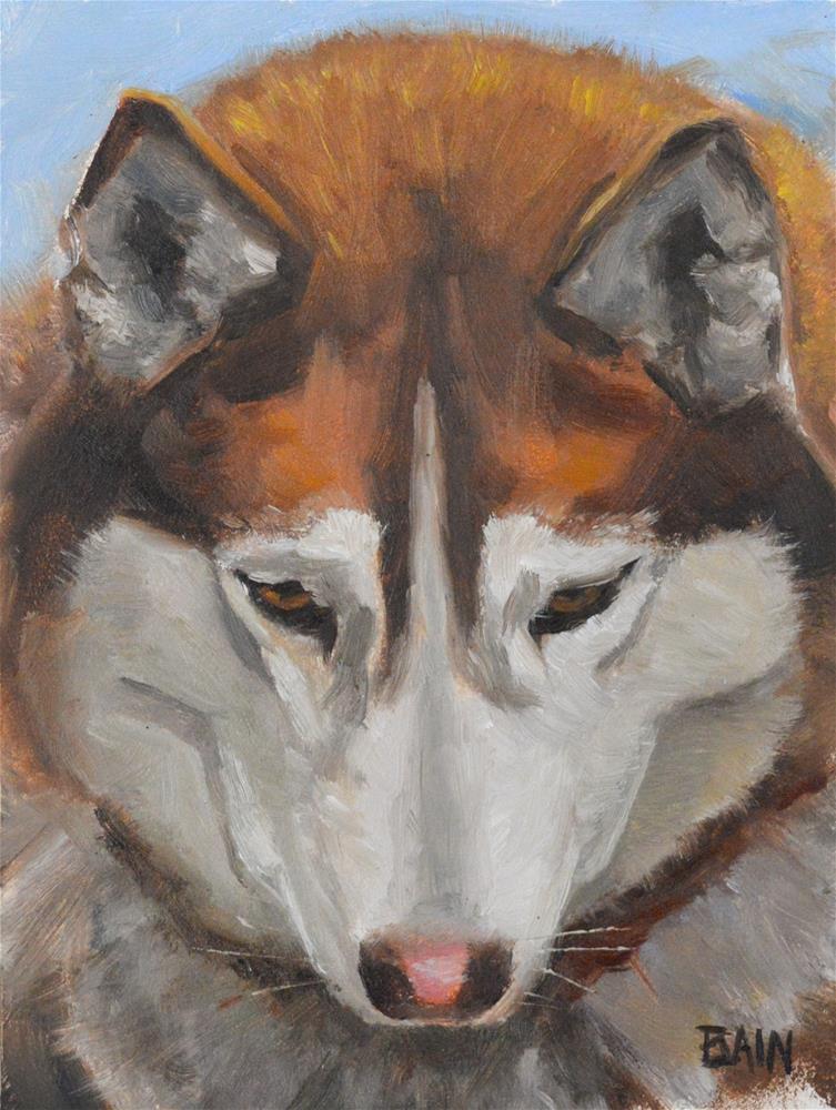 """Husky"" original fine art by Peter Bain"