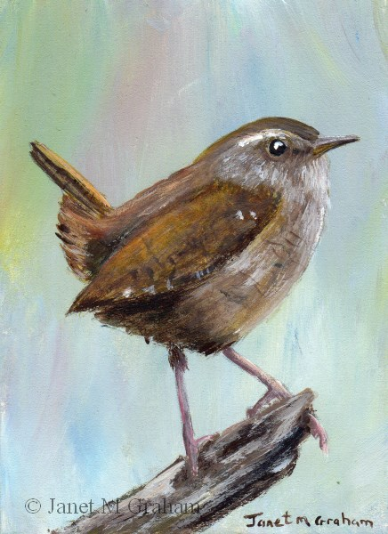"""Wren ACEO"" original fine art by Janet Graham"