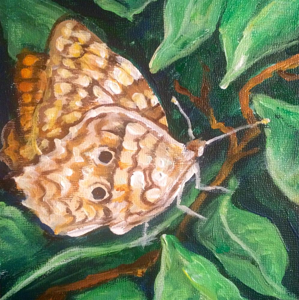 """Butterfly"" original fine art by Valerie Vescovi"