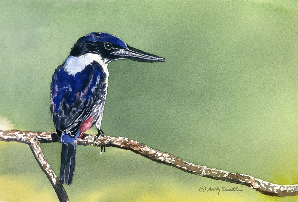 """U is for Ultramarine Kingfisher"" original fine art by Andy Sewell"
