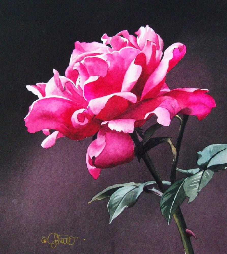 """Very Berry Rose"" original fine art by Jacqueline Gnott, whs"