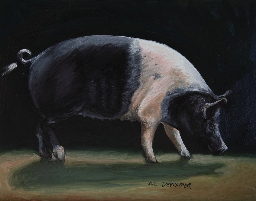 """Hampshire Hog"" original fine art by Sue Deutscher"