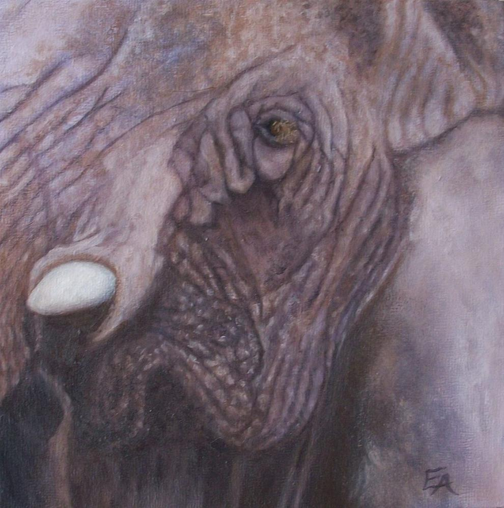 """Elephant, Close Up"" original fine art by Elizabeth Elgin"