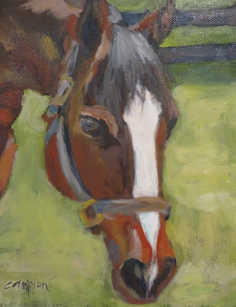 """768 Nick the Horse"" original fine art by Diane Campion"