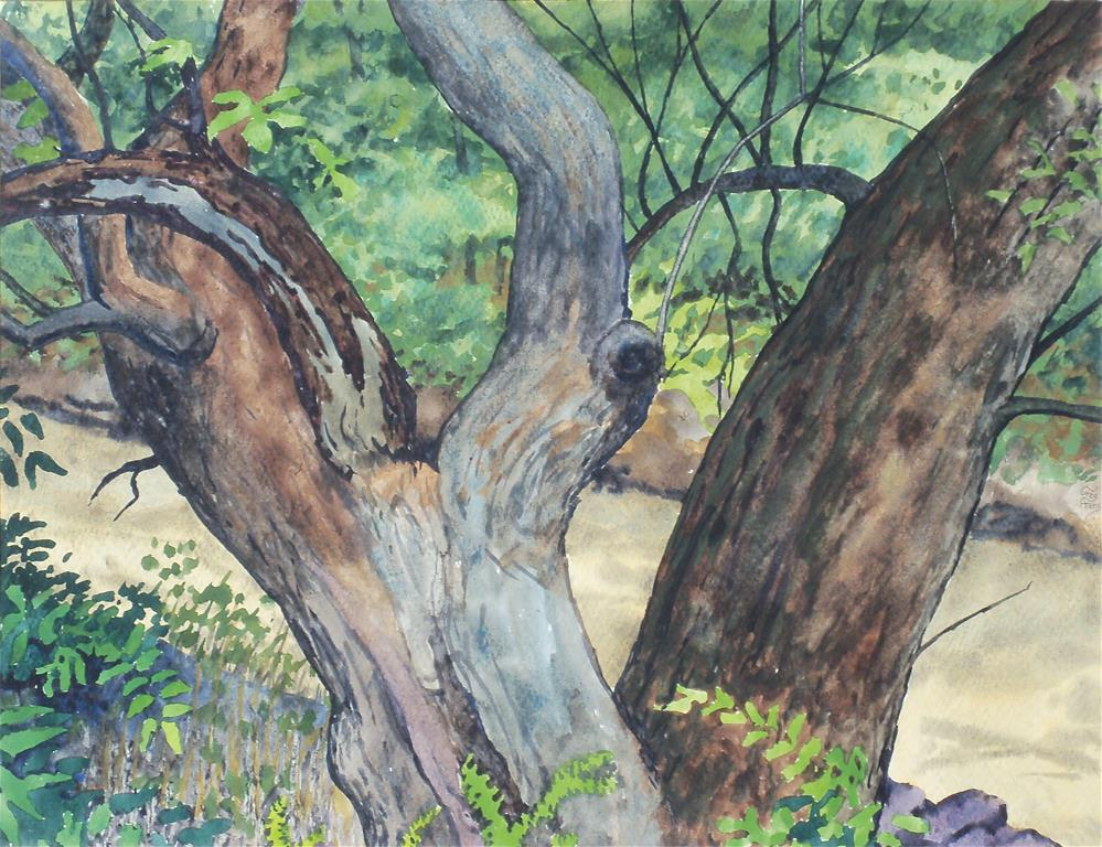 """Tree in Glen Helen"" original fine art by Greg Arens"