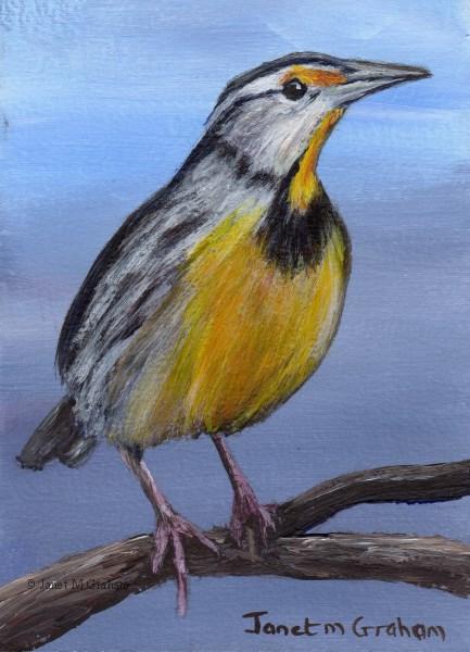 """Eastern Meadowlark ACEO"" original fine art by Janet Graham"