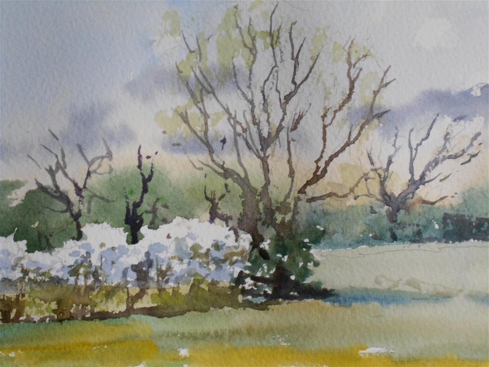 """Blossom in April"" original fine art by Graham Findlay"