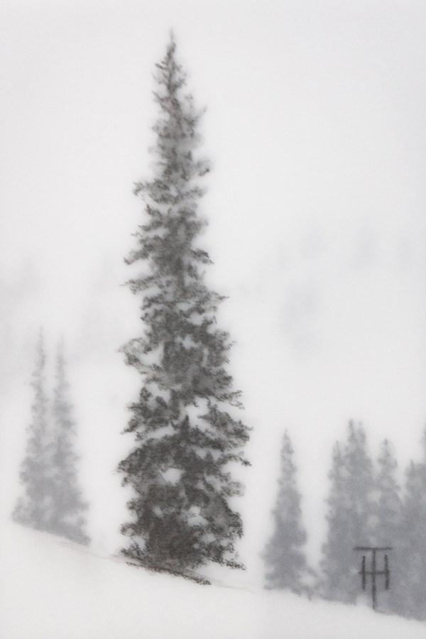 """Mountain Spruce III"" original fine art by Terri Heinrichs"