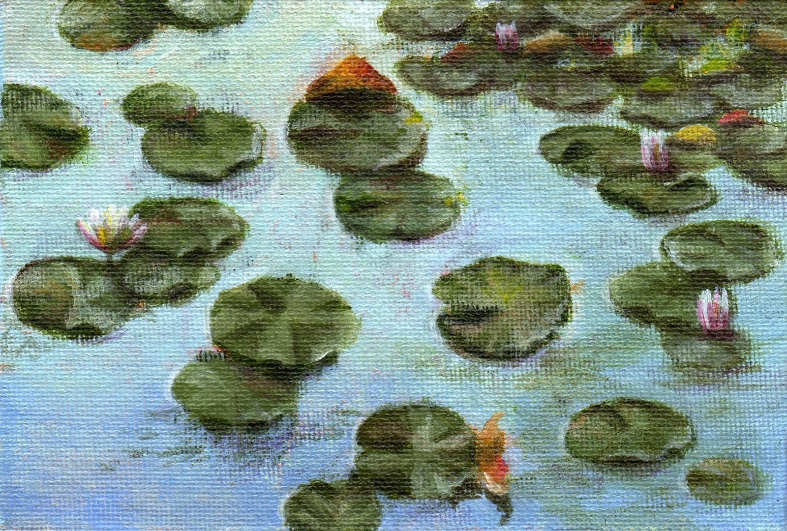 """Early Morning Water Lilies"" original fine art by Debbie Shirley"