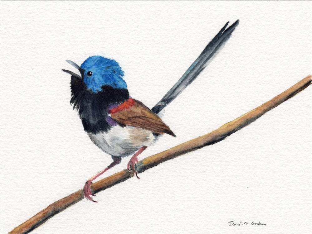 """Variegated Fairy Wren"" original fine art by Janet Graham"