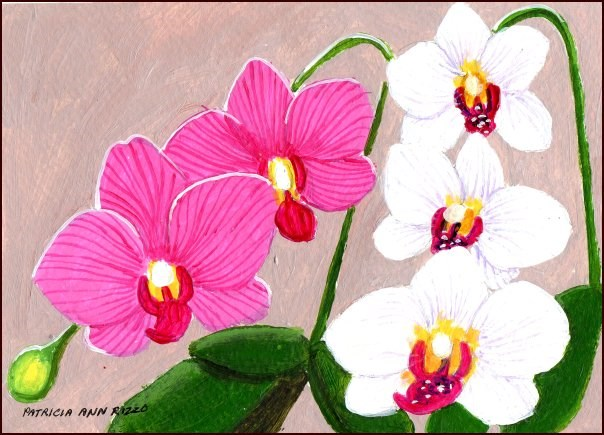 """My Orchids 2"" original fine art by Patricia Ann Rizzo"