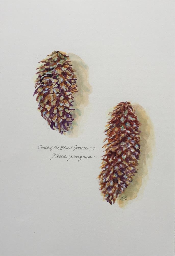"""Cones of the Blue Spruce - Picea pungens"" original fine art by Jean Krueger"