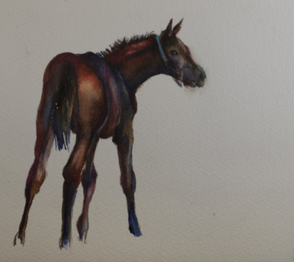 """Kentucky Foal #2"" original fine art by Sue Churchgrant"
