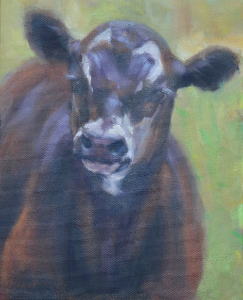 """The Black calf"" original fine art by Tracy Klett"