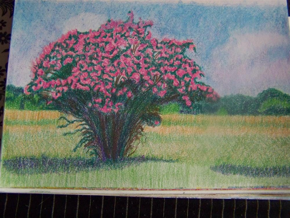 """Cape Charles Crape Myrtle"" original fine art by Elaine Shortall"