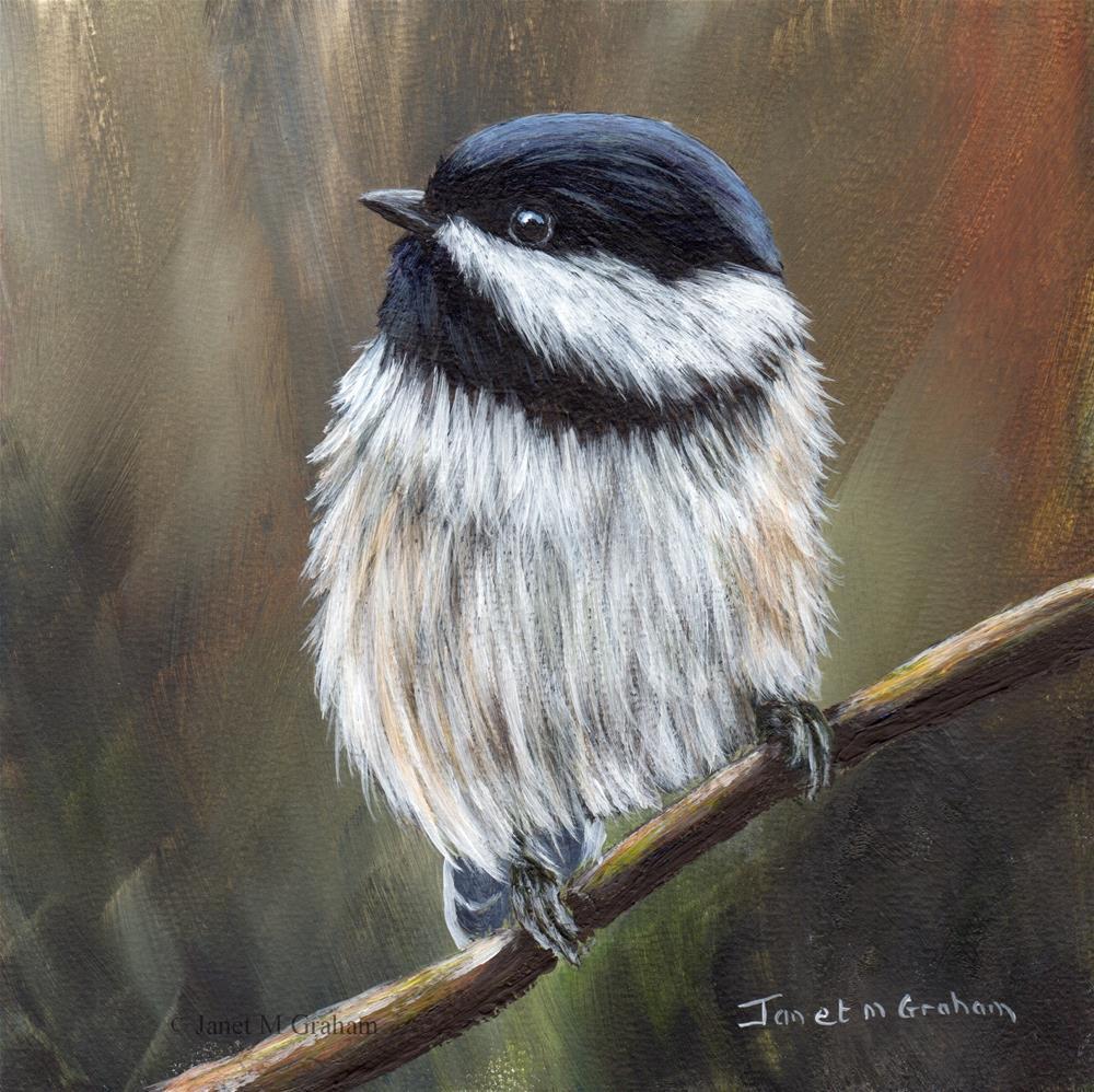 """""""Black Capped Chickadee No 5"""" original fine art by Janet Graham"""
