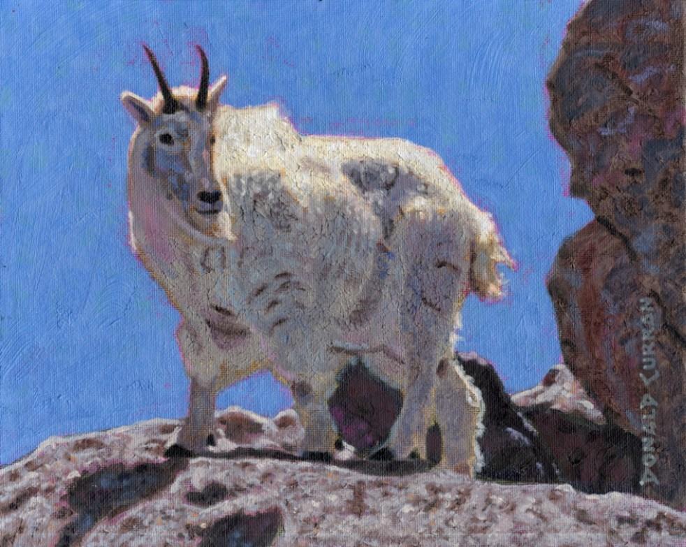 """Mountain Goat"" original fine art by Donald Curran"