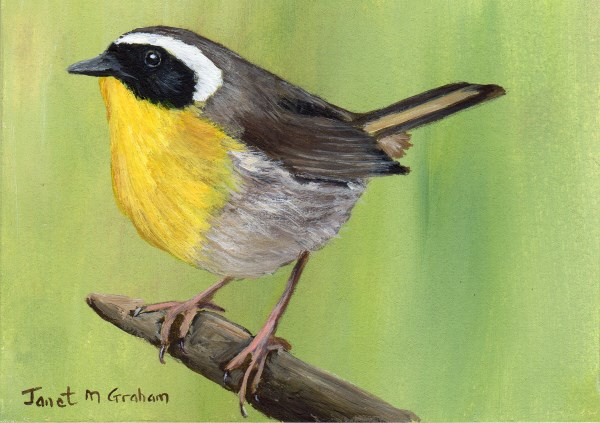 """Common Yellowthroat ACEO"" original fine art by Janet Graham"