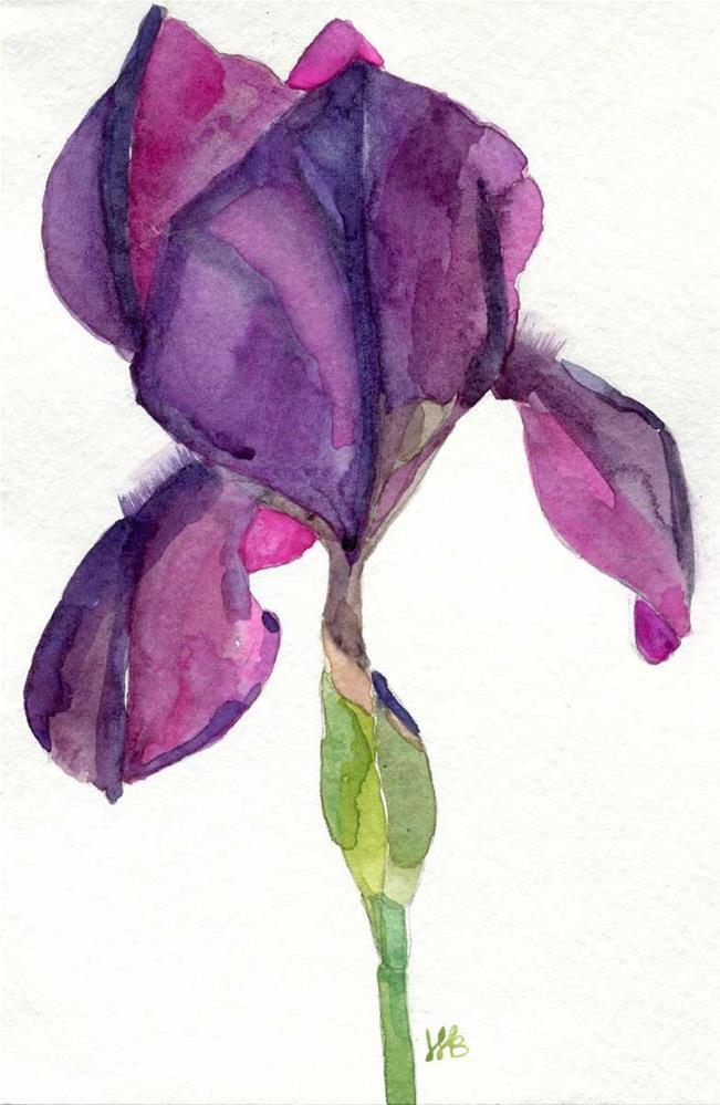 """Iris"" original fine art by Heather Bennett"