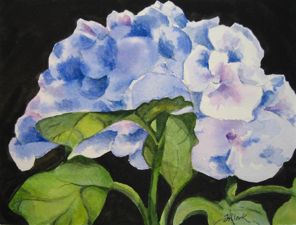 """Hydrangea"" original fine art by Judith Freeman Clark"