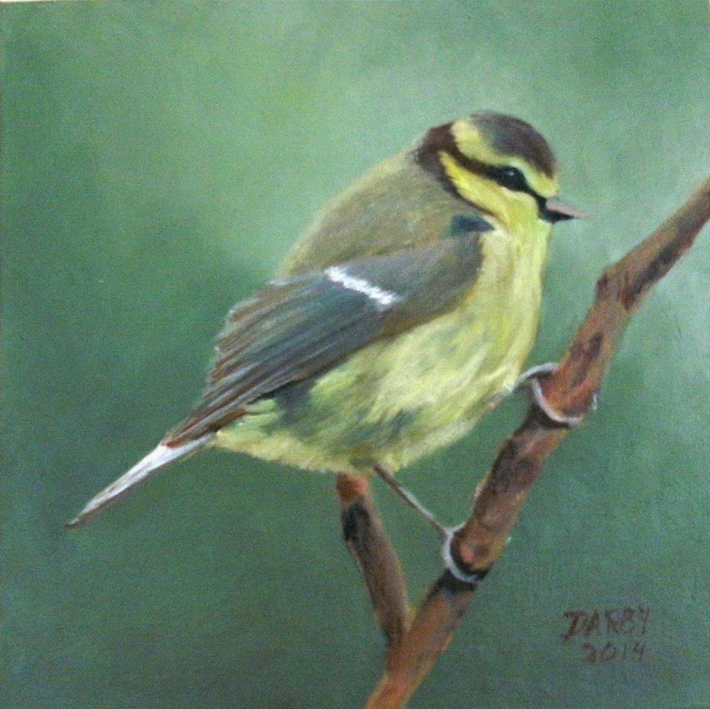 """Blue Tit"" original fine art by Lynn Darby"