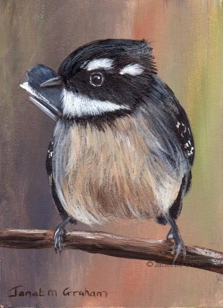"""Grey Fantail ACEO"" original fine art by Janet Graham"