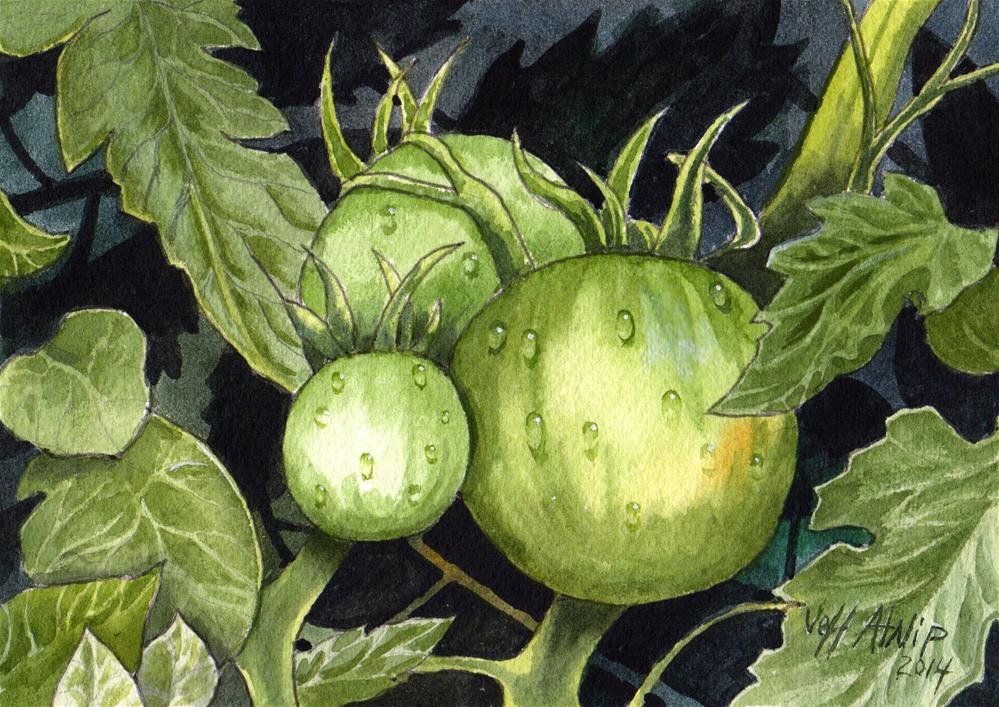 """Green Tomatoes #1"" original fine art by Jeff Atnip"