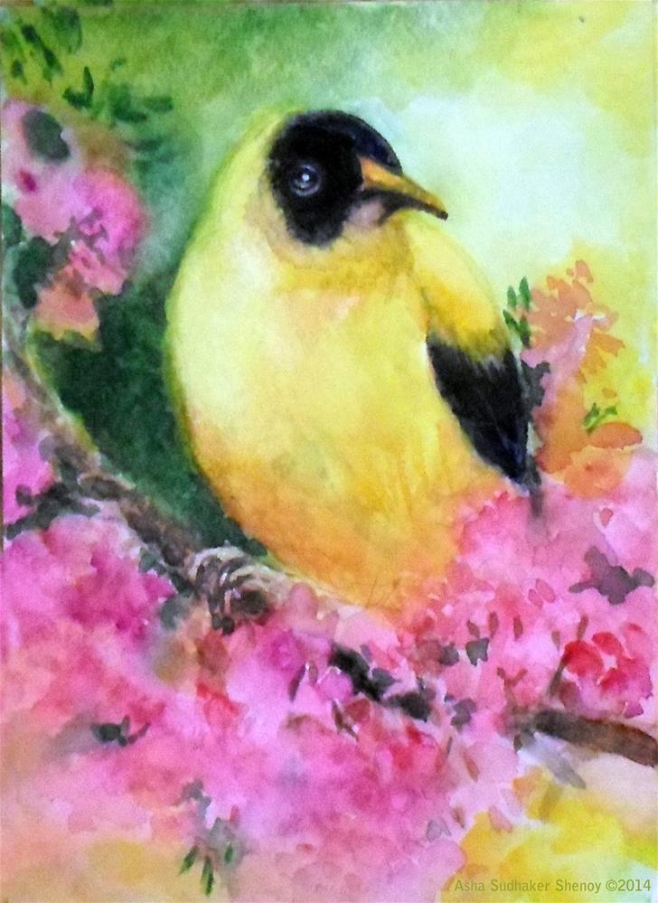 """Golden Oriole"" original fine art by Asha Shenoy S"