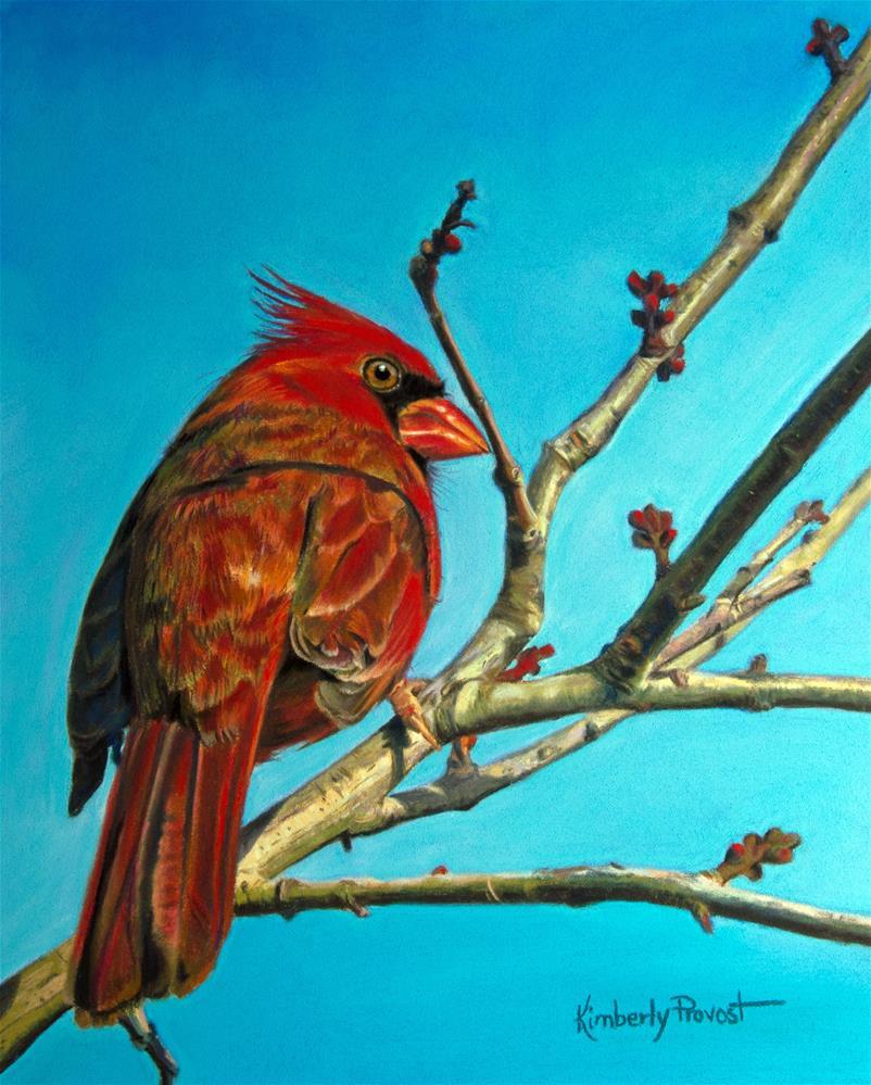 """Solitary Cardinal"" original fine art by Kimberly Provost"
