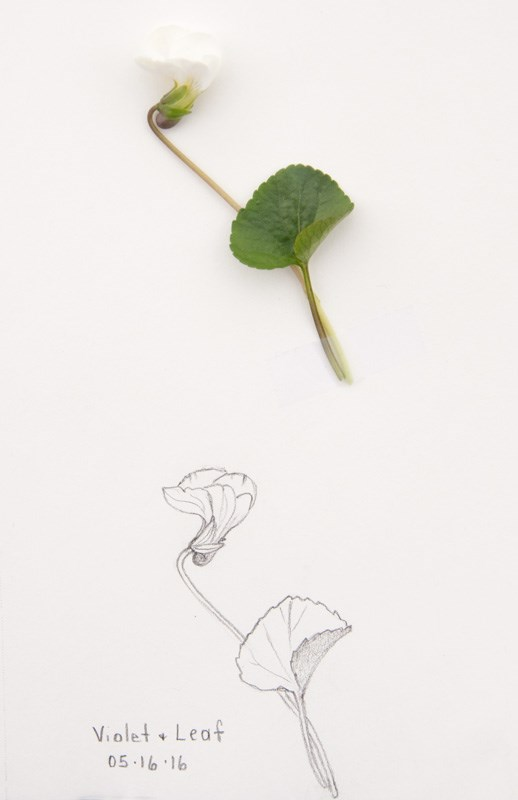 """Daily Sketch: Violet and Leaf"" original fine art by Debbie Lamey-Macdonald"