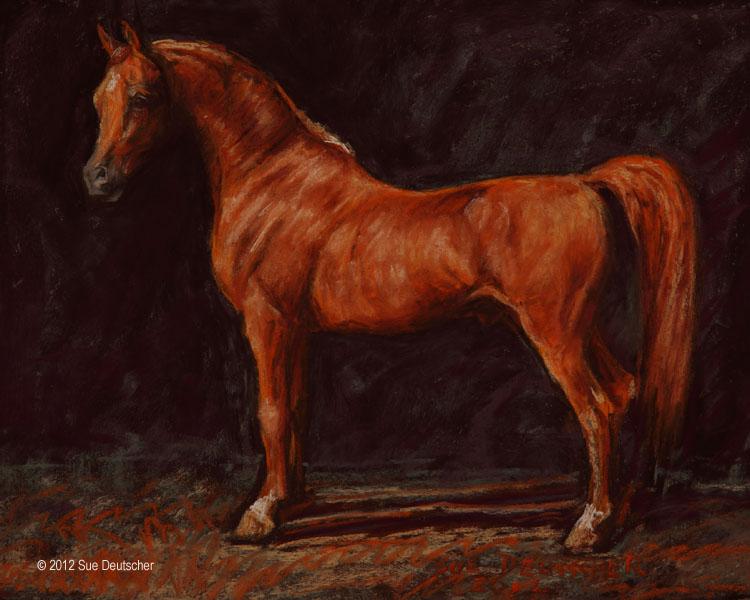 """""""Arabian Stallion"""" original fine art by Sue Deutscher"""
