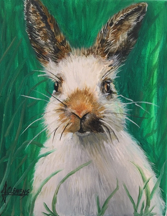 """Bunny"" original fine art by Jolynn Clemens"