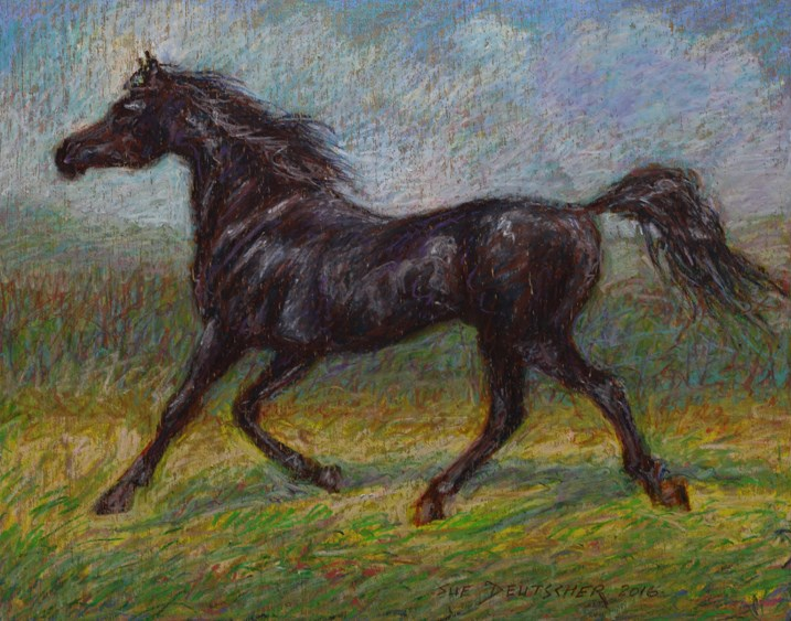 """Black Arabian Stallion"" original fine art by Sue Deutscher"
