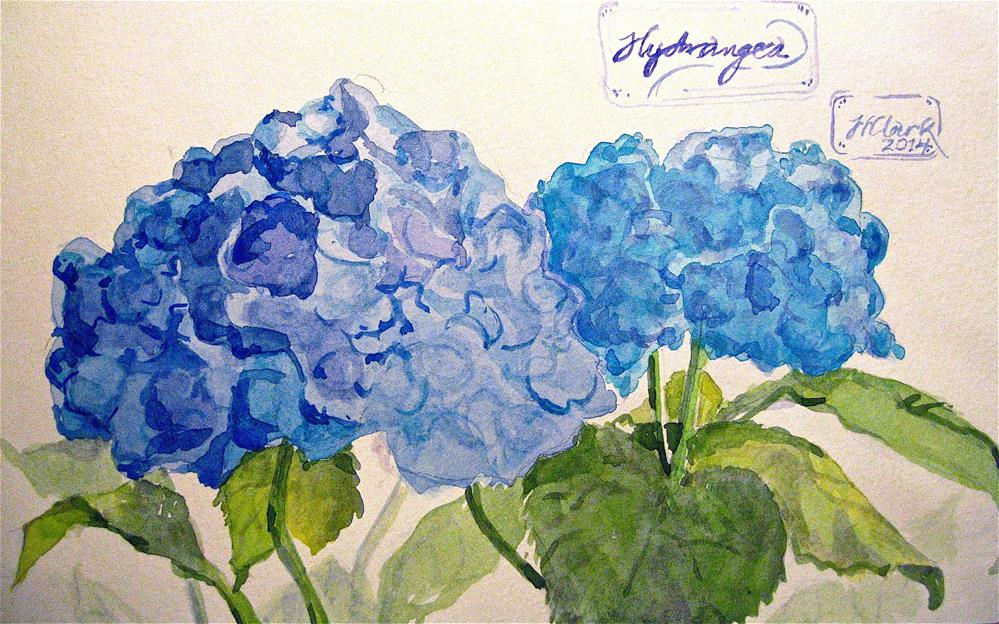 """Hydrangea Blossoms, study"" original fine art by Judith Freeman Clark"