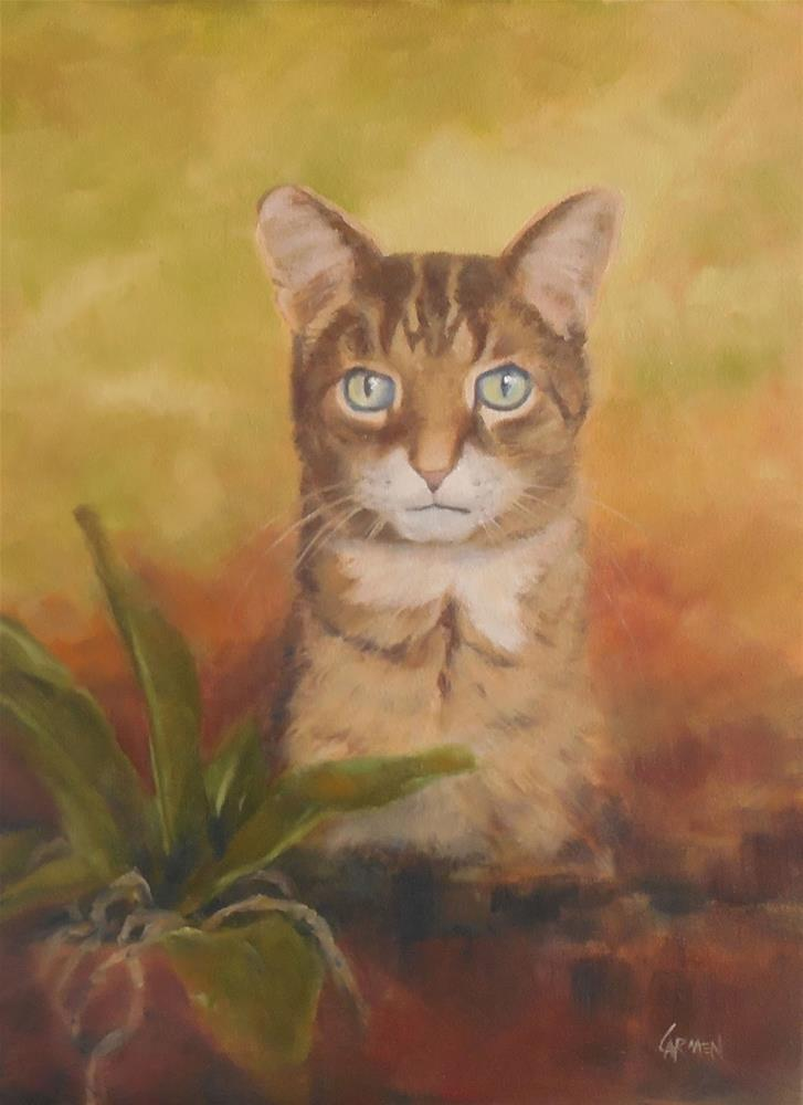"""Johnny, 12x16 Portrait of Cat, Oil on Canvas Pet Portrait"" original fine art by Carmen Beecher"