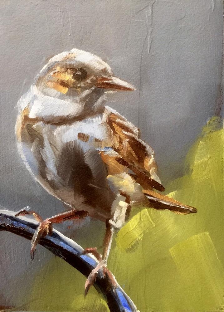 """Foggy Morning Sparrow"" original fine art by Gary Bruton"