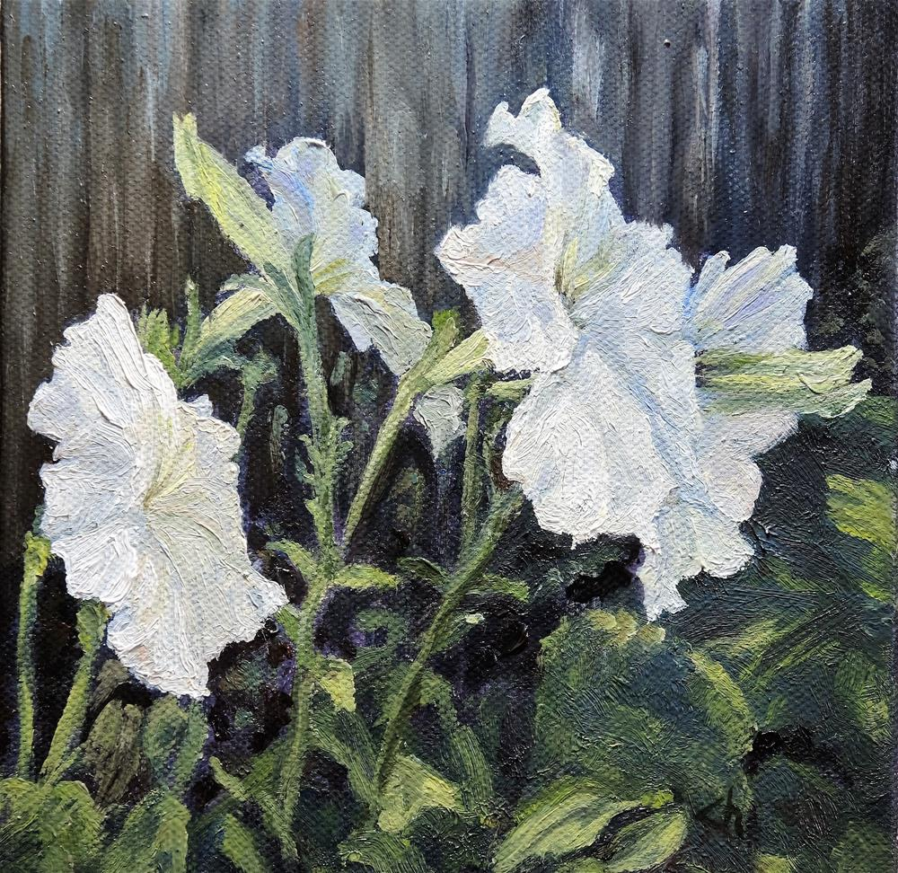 """White Petunias"" original fine art by Candi Hogan"