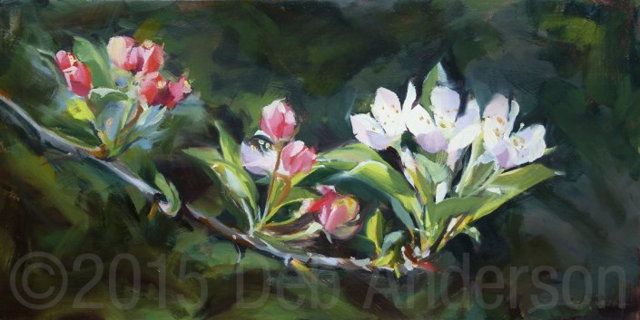 """""""Oil Painting: Branch with Apple Blossoms"""" original fine art by Deb Anderson"""