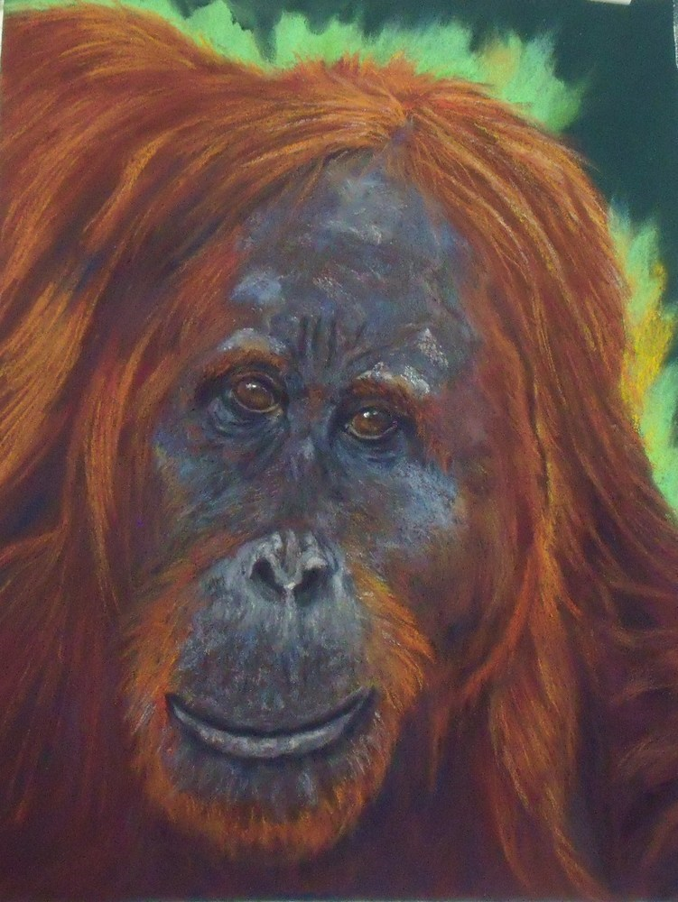 """Orangutan"" original fine art by Nelvia McGrath"