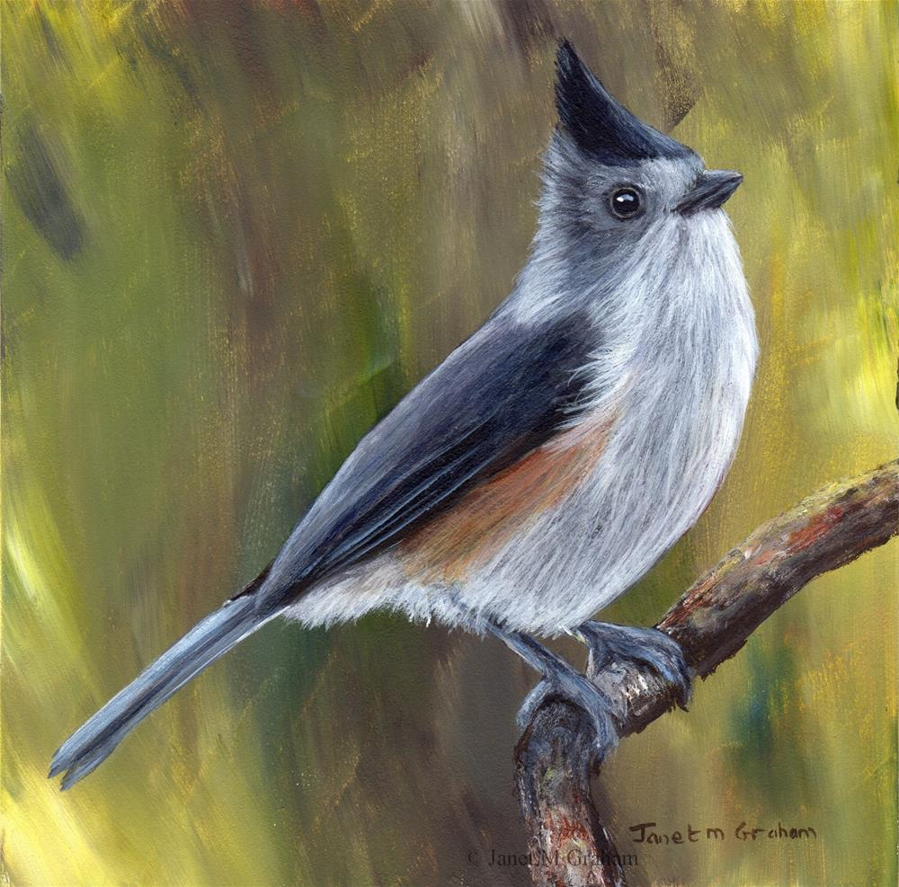 """Black Crested Titmouse"" original fine art by Janet Graham"