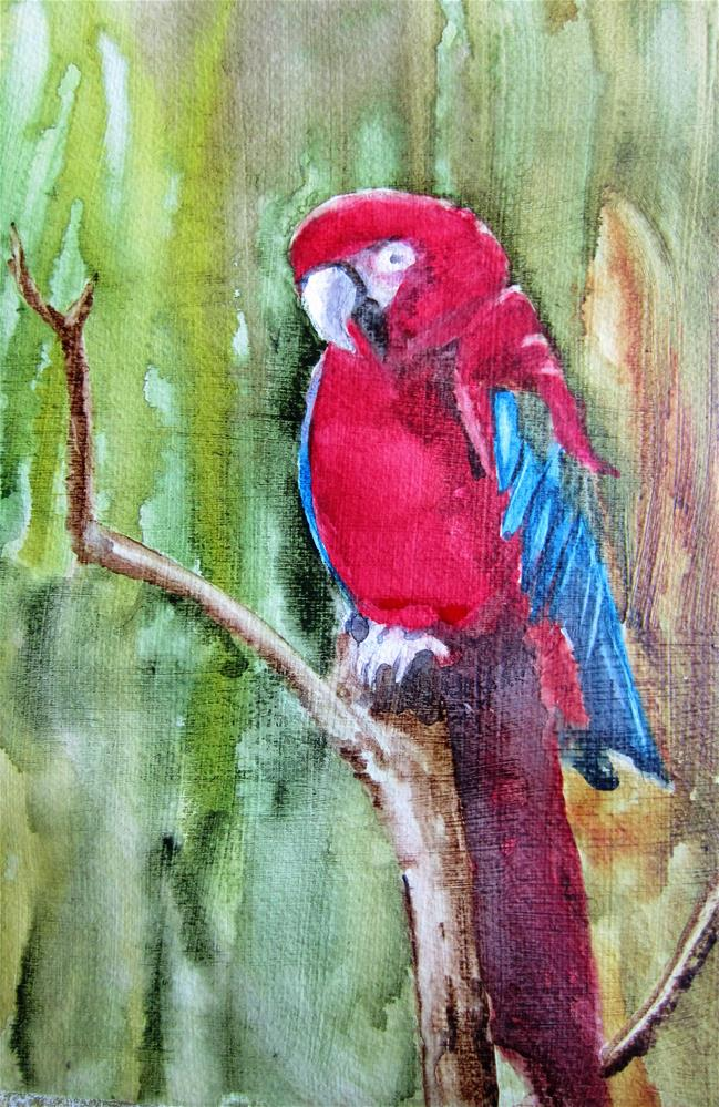 """Parrot"" original fine art by Dolores Pettit"