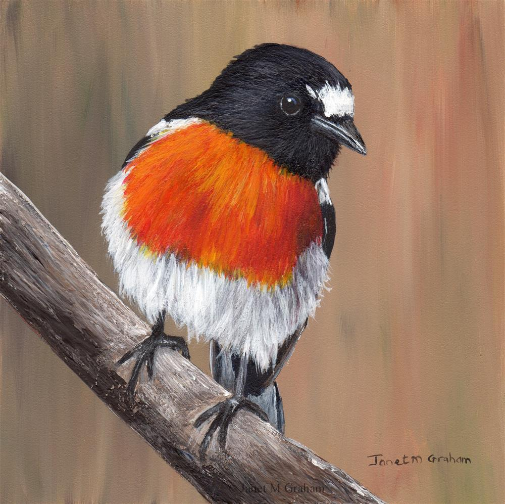 """Scarlet Robin"" original fine art by Janet Graham"