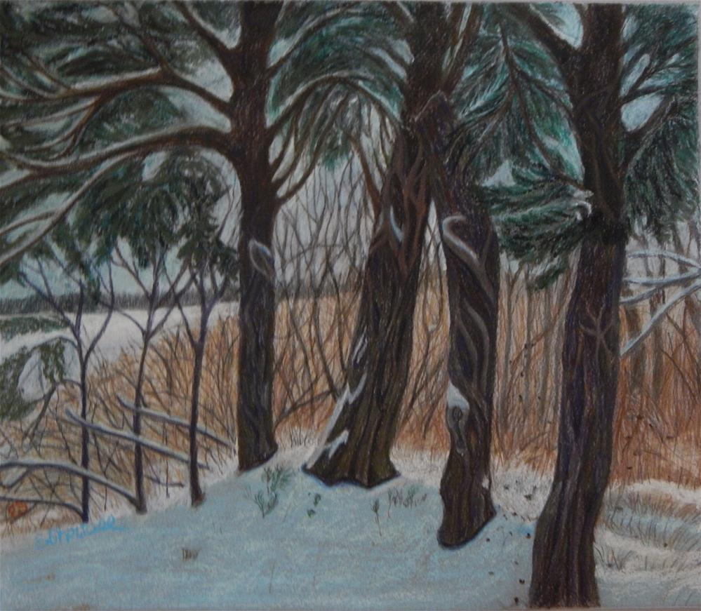 """Snow Around Cedars"" original fine art by Elaine Shortall"