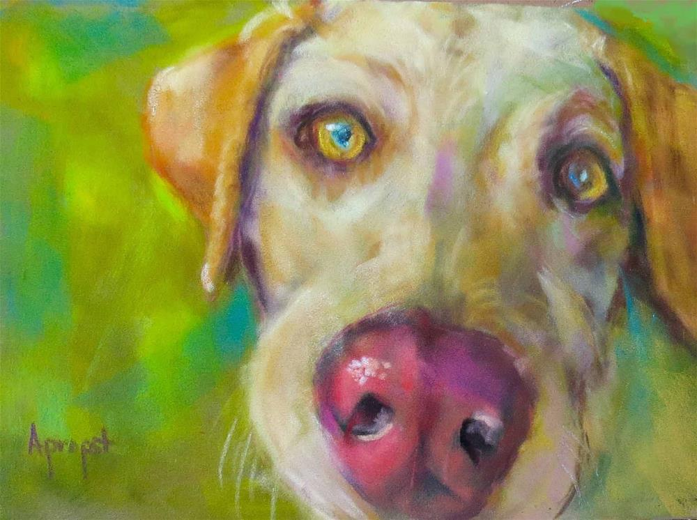 """Gentle Yellow Lab"" original fine art by Anne Marie Propst"